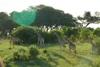 matopos giraffe